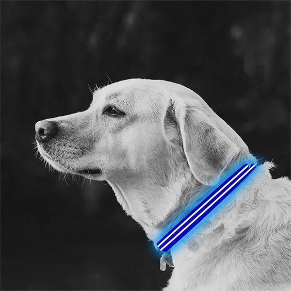 Medium Blue LED Lite Up Dog Collar inset 1