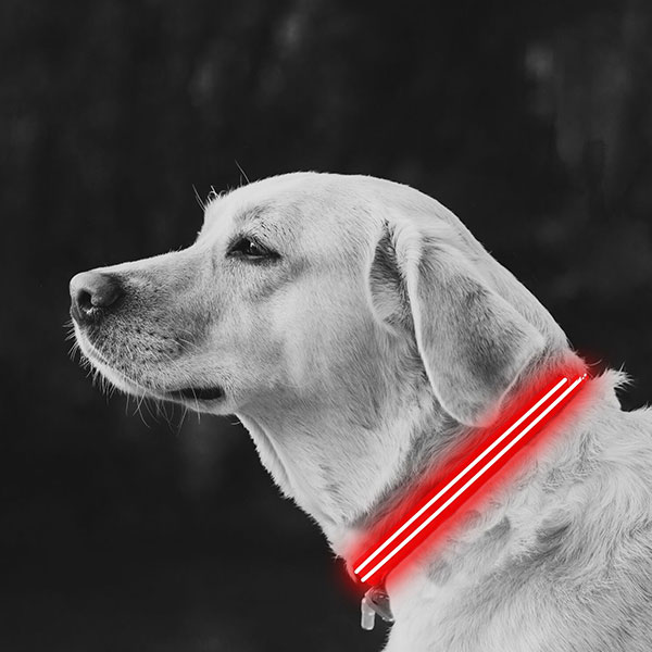 Medium Red LED Lite Up Dog Collar inset 1